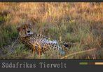 Südafrikas Tierwelt – Noch liegt der Gepard….