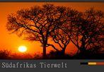Südafrikas Tierwelt – und wo sind hier die Tiere?....