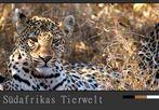 Südafrikas Tierwelt – Winterlicht auf dem Leopard und ein Fotografen Tipp……