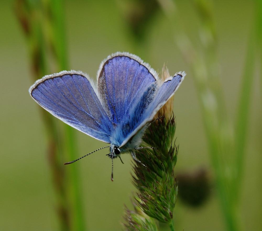 Süddeutsch Blau
