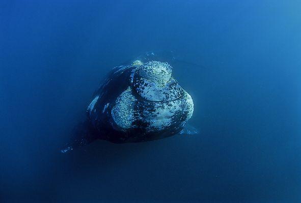 Südlicher Glattwal