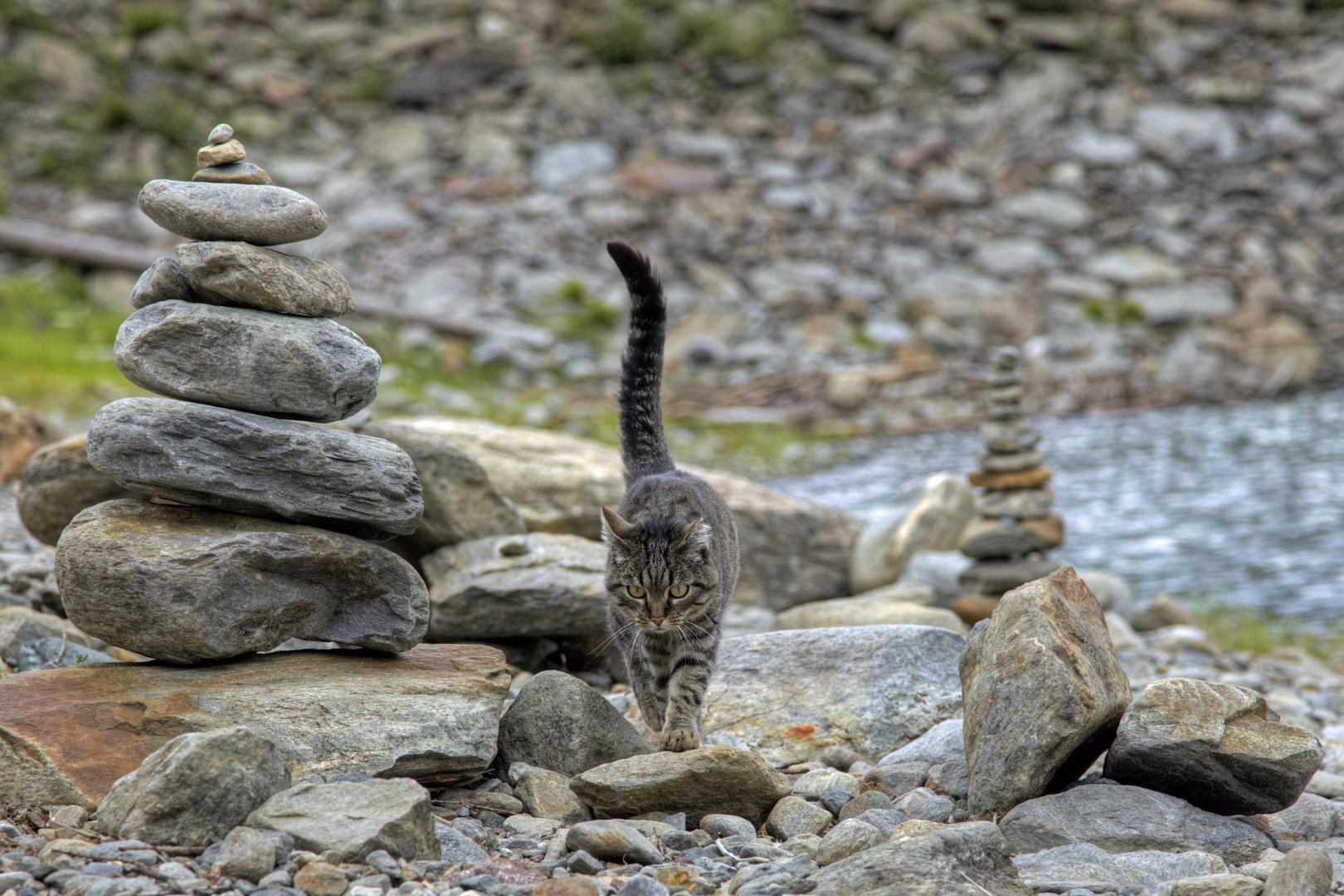 Südtiroler Katze...