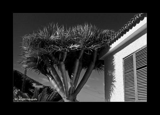 Suenos del Tenerife II