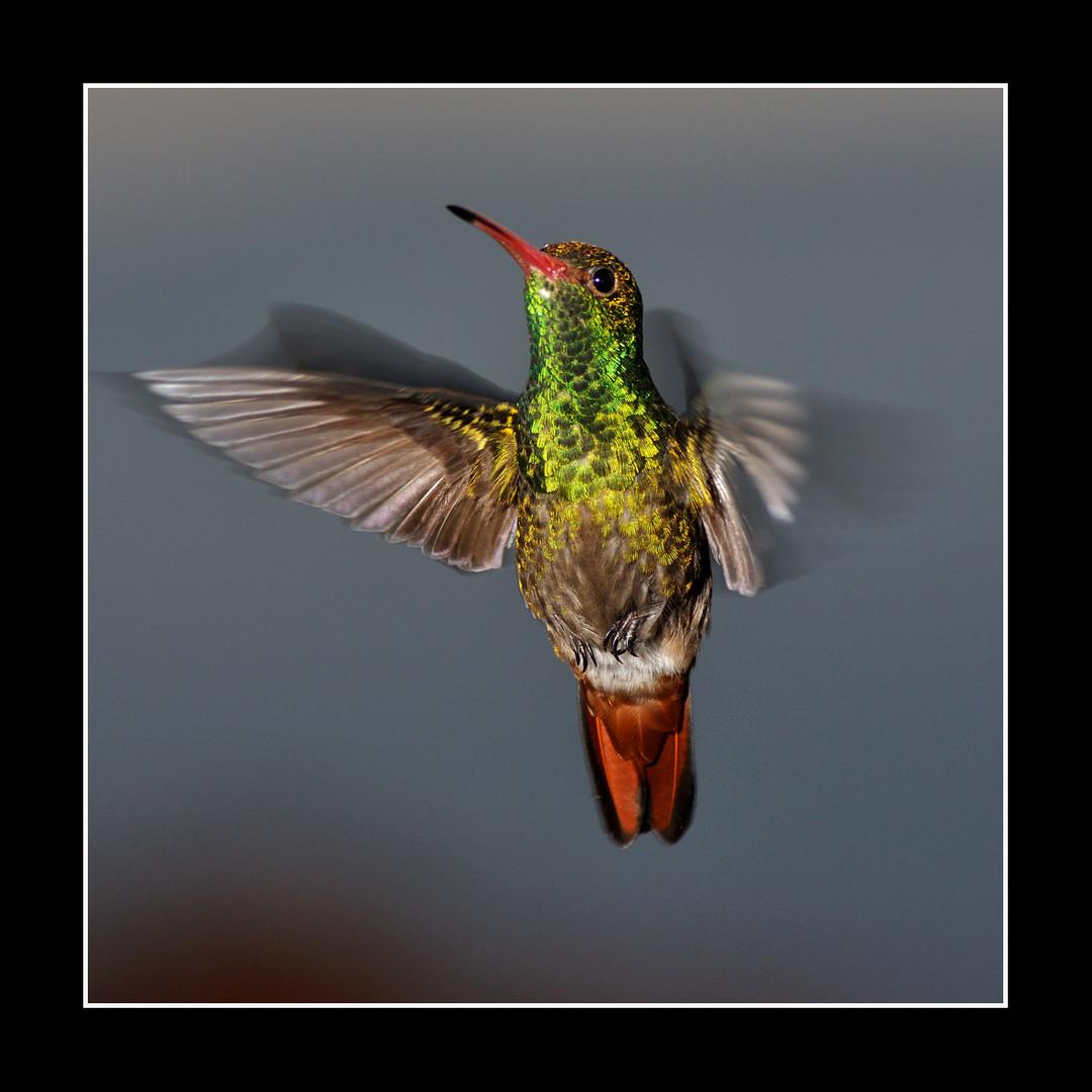 Sueño con las alas del colibrí