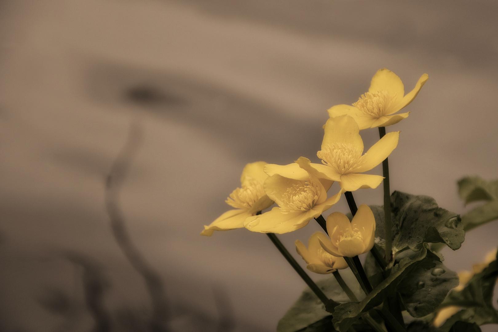 süße Blume