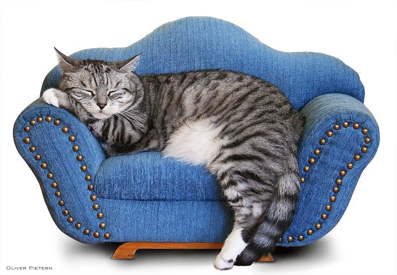 s sse tr ume foto bild tiere haustiere katzen bilder auf fotocommunity. Black Bedroom Furniture Sets. Home Design Ideas