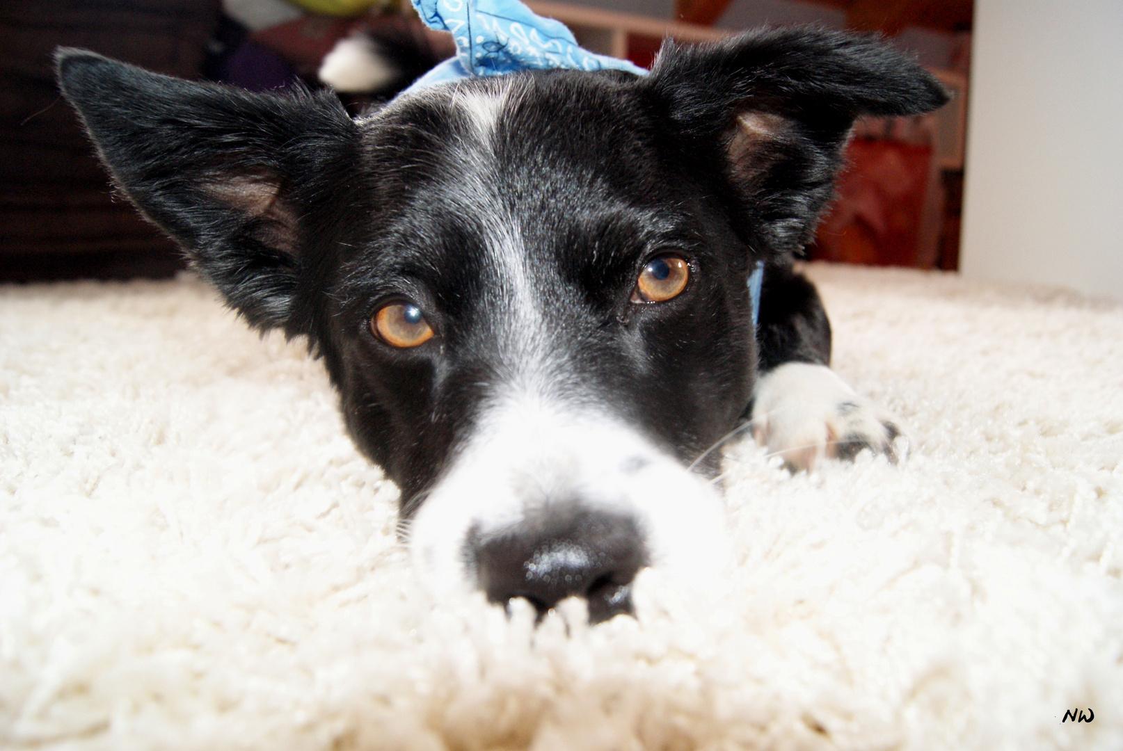 süßer Hund mit Halstuch