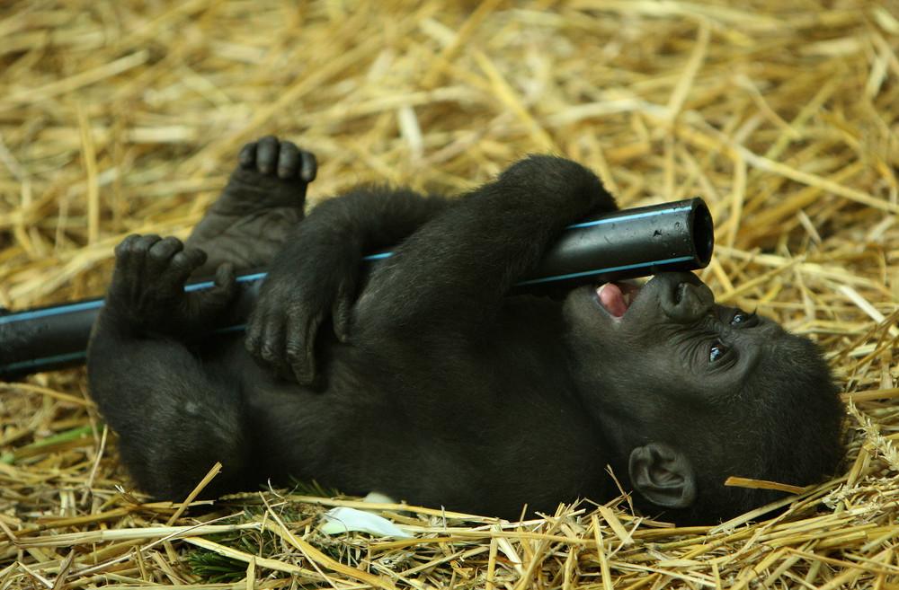 s es affenbaby foto bild tiere tierkinder zoo bilder auf fotocommunity. Black Bedroom Furniture Sets. Home Design Ideas