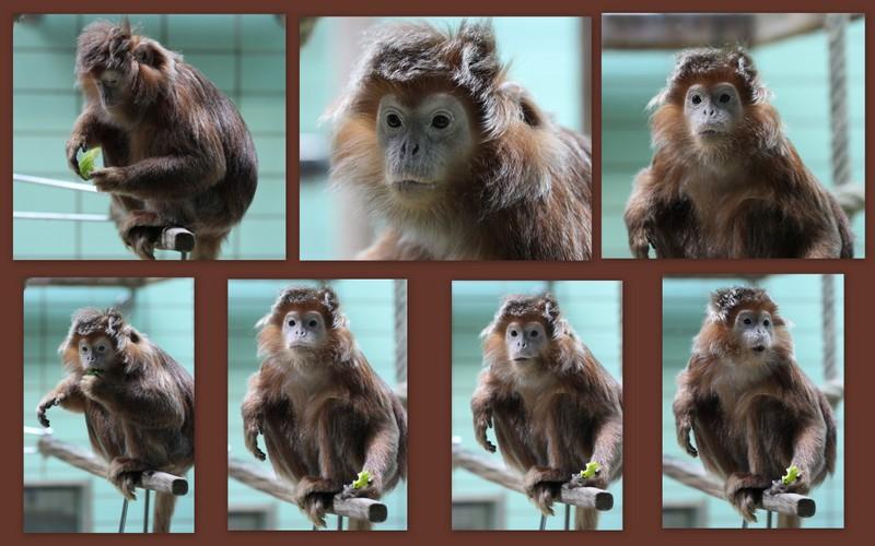 süßes Affenmädchen