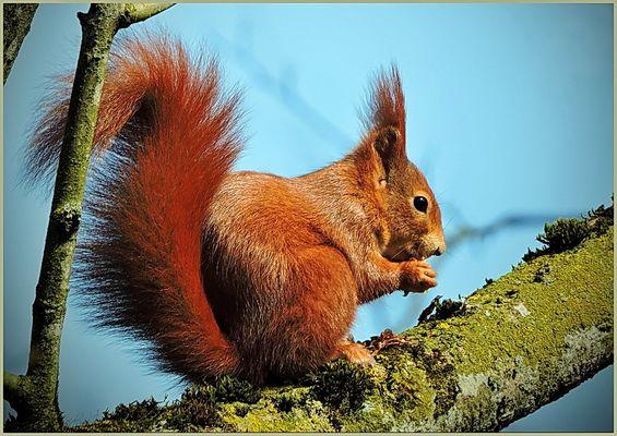 süßes Eichhörnchen...