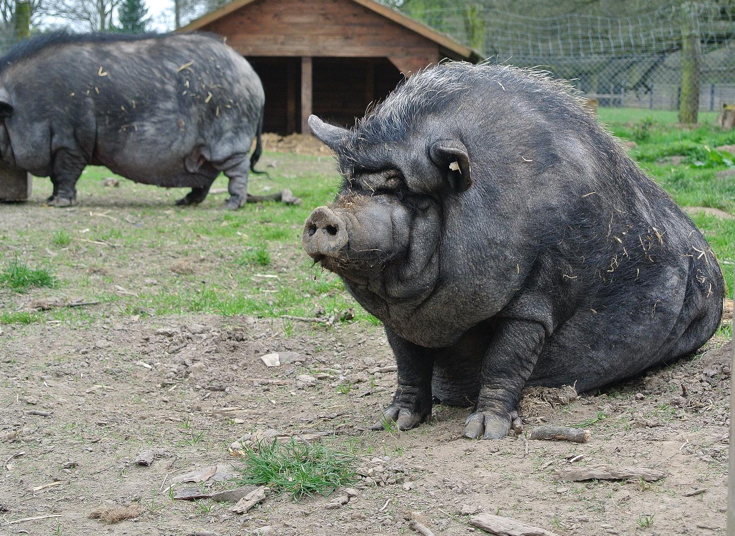 Süsses Schweinchen..;-)