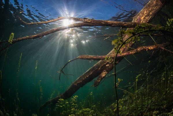 Suesswasser und Gegenlicht...