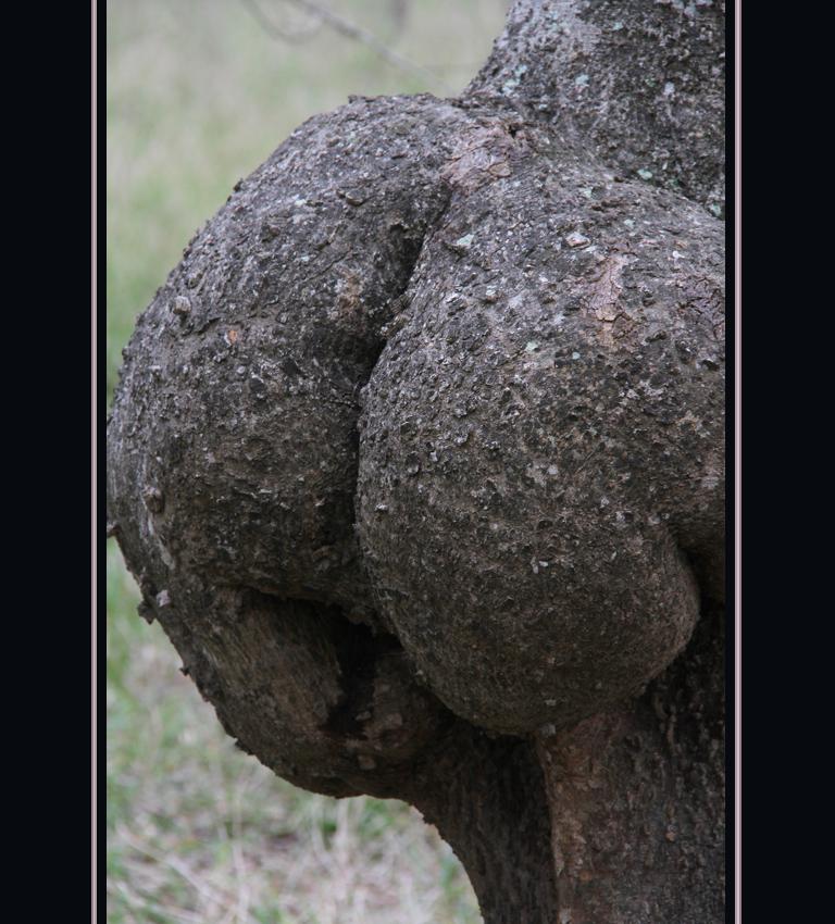 Sugerentes Pominencias Arboreas