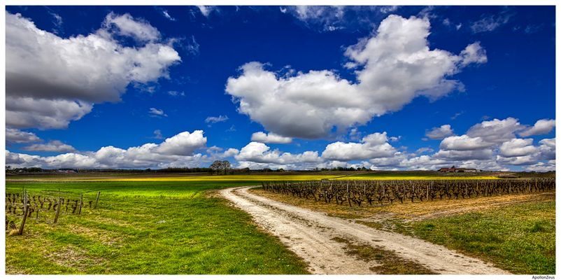 Suivez le chemin, il vous mènera à du très bon vin :-)