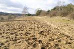 suivons les traces à la plaine de Chanfroy, forêt de Fontainebleau
