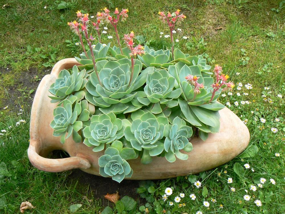 sukkulenten in amphore foto bild pflanzen pilze. Black Bedroom Furniture Sets. Home Design Ideas