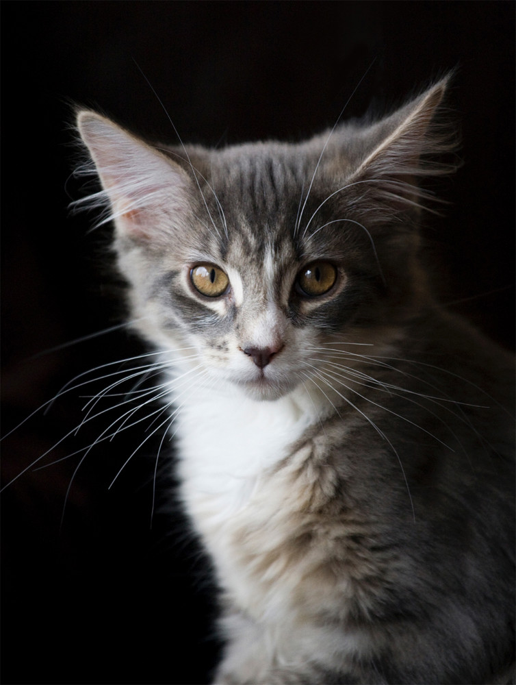 Sully mit 5 Monaten