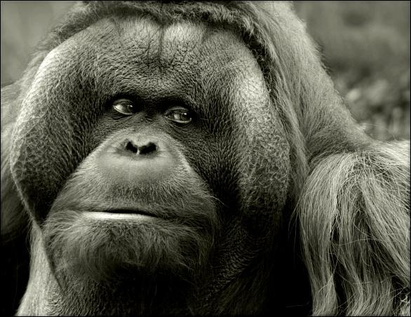 ...Sumatra, das wärs jetzt....