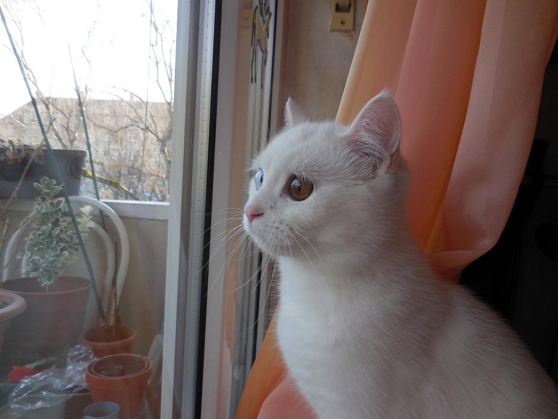 Sumiko wartet auf den Fühling...