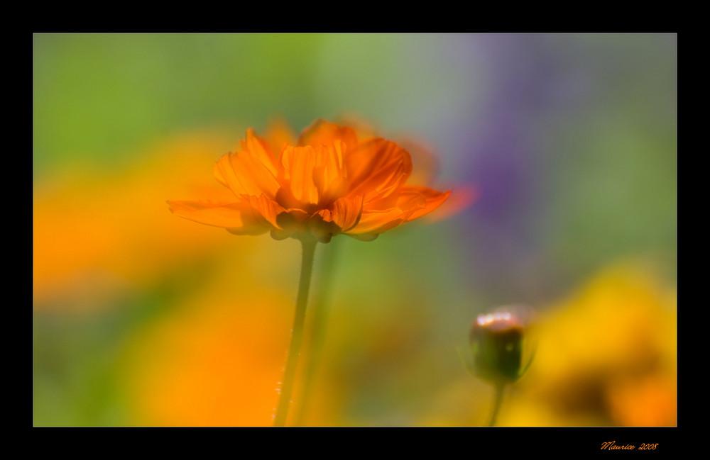 summer colours...