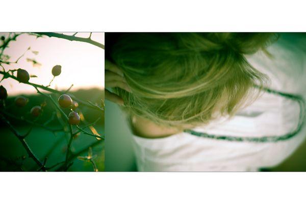 [ summer leaves ]