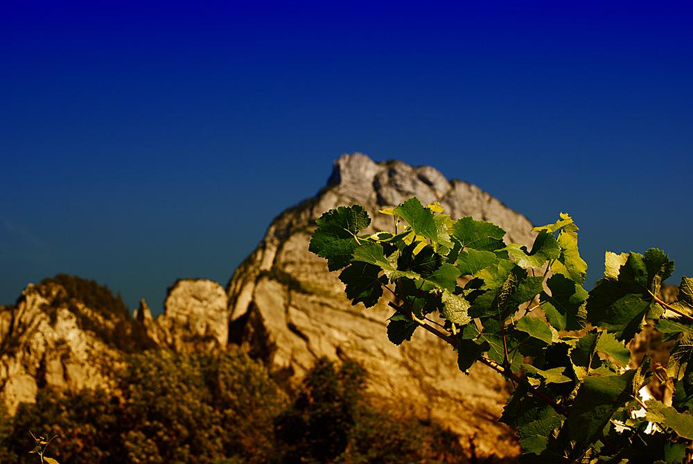 summer wine...