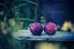 summer.fruits*