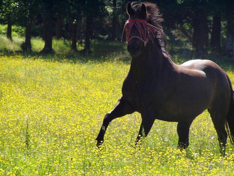 Summerhorse