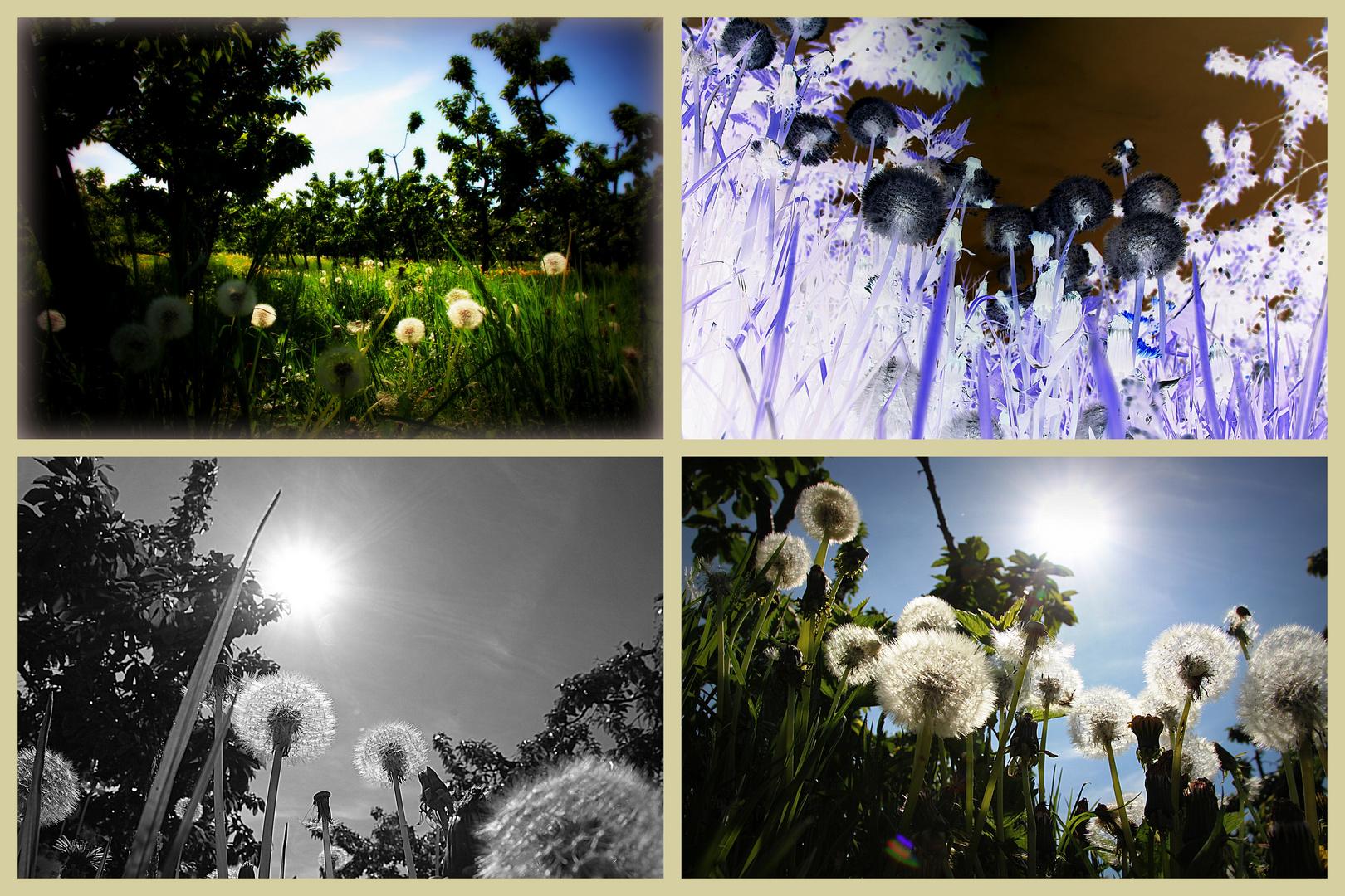 Summermovie