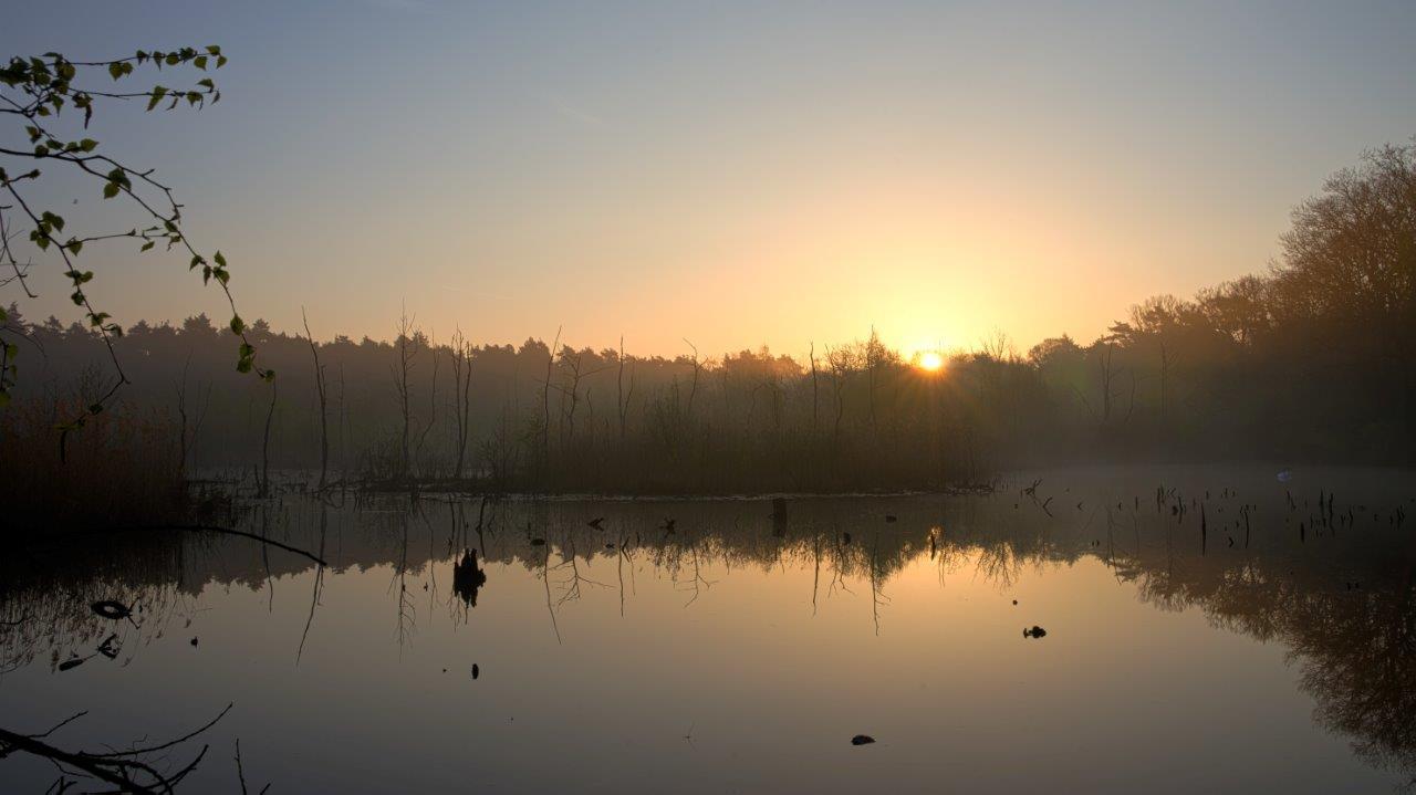 Sumpf im Sonnenaufgang