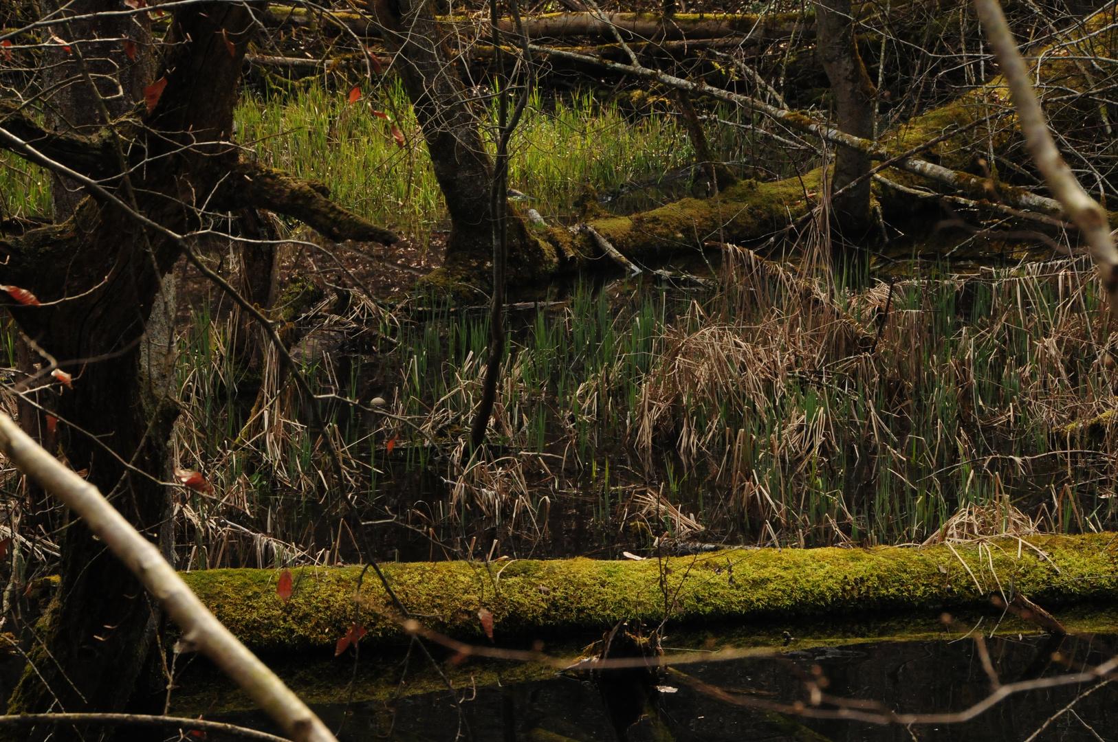 Sumpf und Tümpel
