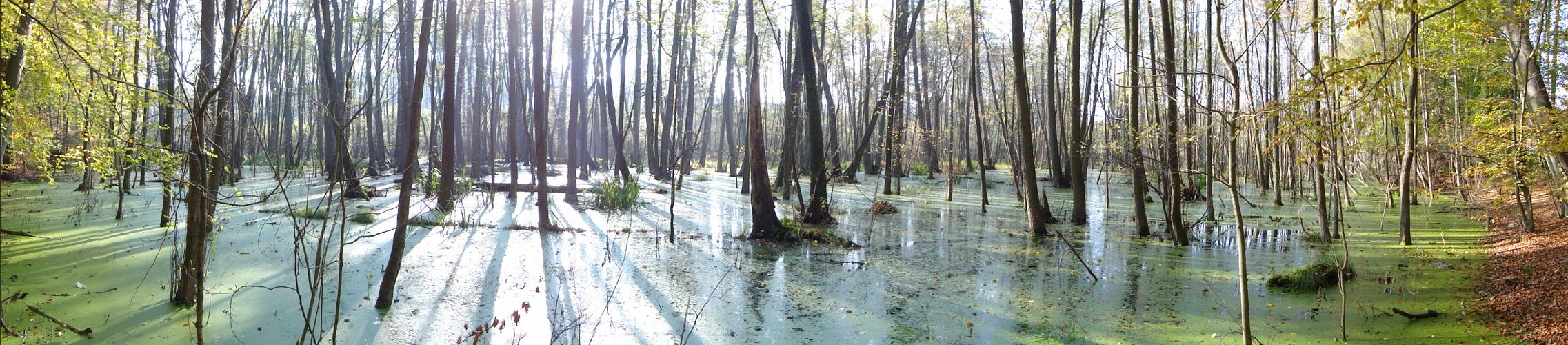 Sumpfgebiet...