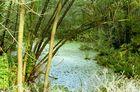 Sumpfgebiet der Wublitz
