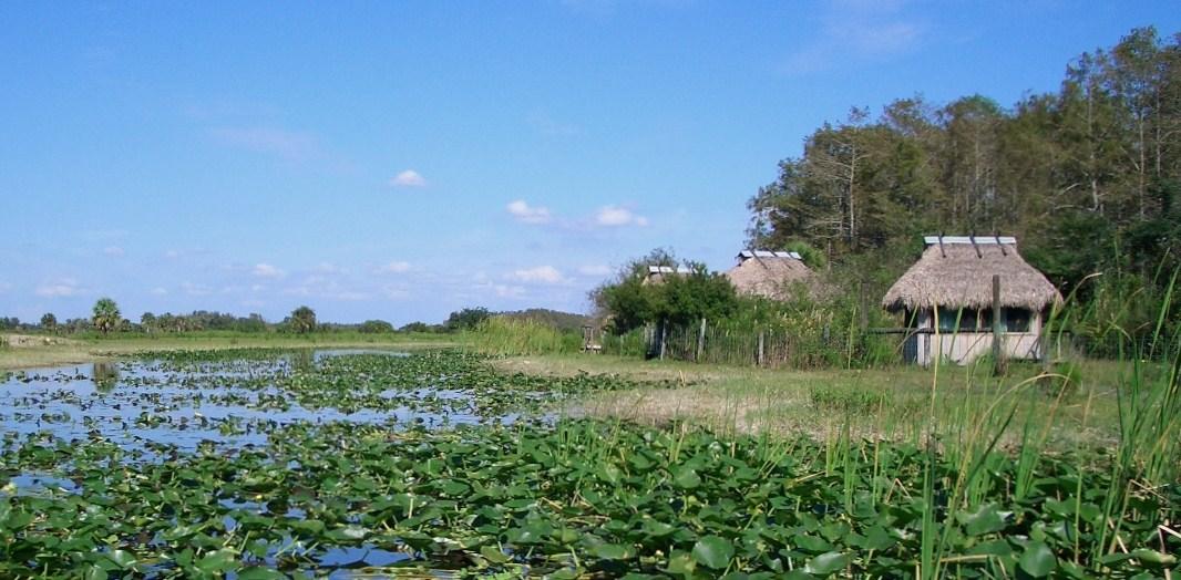Sumpfgebiet - Florida