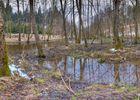Sumpfgebiet im Burrenwald