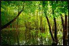 Sumpfgebiet in Brandenburg