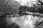 Sumpfgebiet in SW