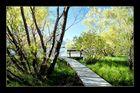 Sumpfgebiet Nähe Queenstown