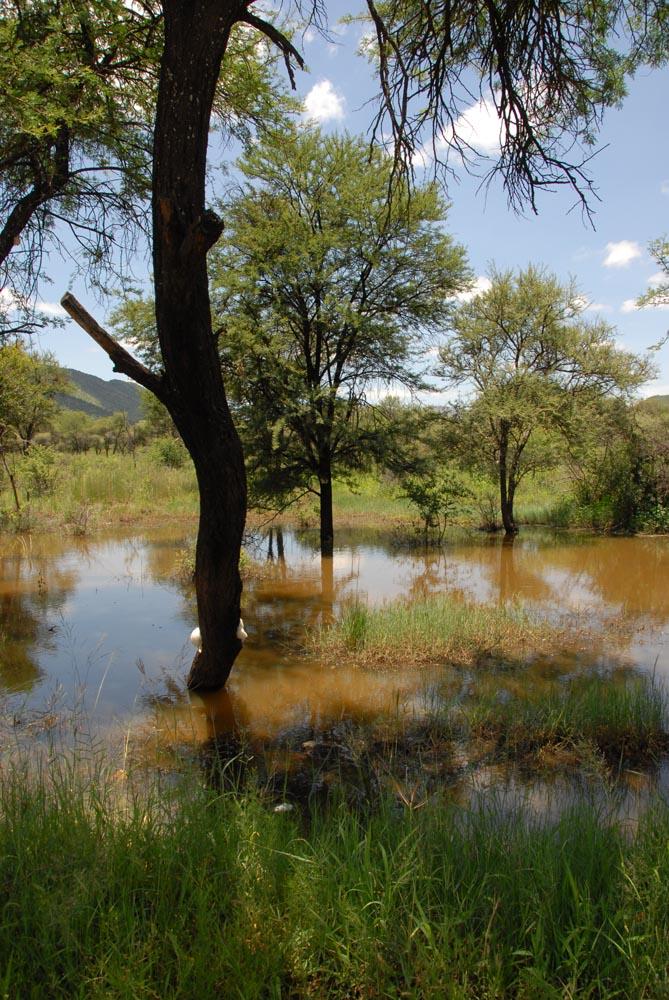 Sumpfgebiet Südafrika