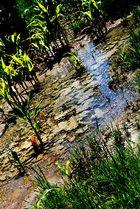 Sumpfgebiete