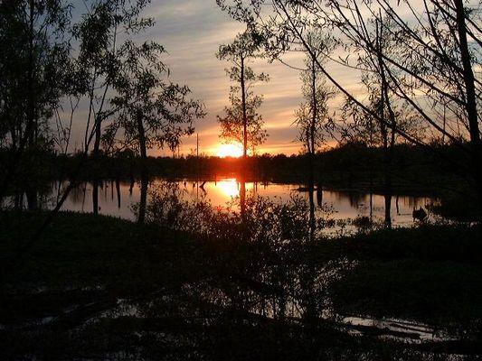 Sumpfland in der Nähe von Memphis - Tennessee