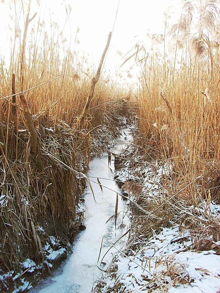 Sumpflandschaft bei eisigen Temperaturen und Sonne