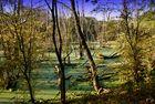 Sumpflandschaft in Neuss-Reuschenberg (2)