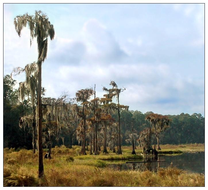 Sumpfwelten2