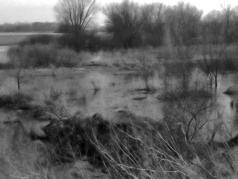 Sumpfwiese im Oderbruch