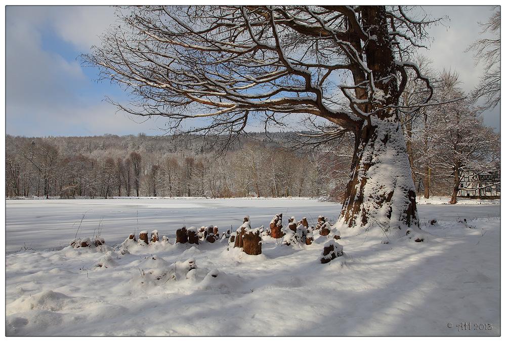 Sumpfzypresse im Schnee