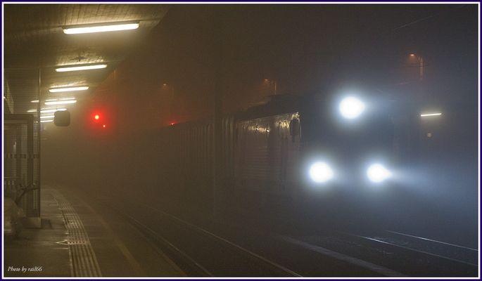 Sumsi im Nebel
