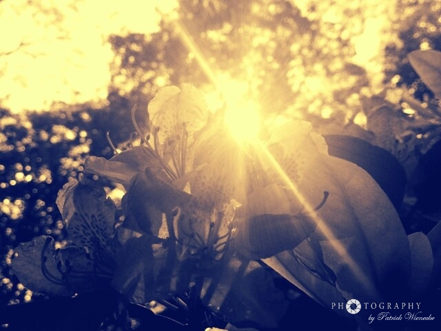 Sun breaking through flowers
