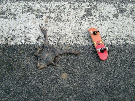 sun-dried roadkill