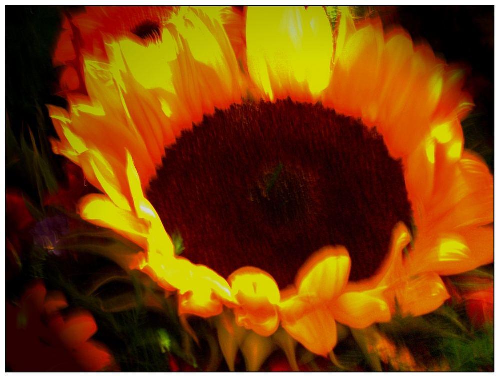 Sun-Flo im Winter